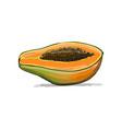 papaya sketch for your design vector image vector image