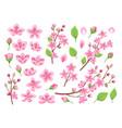 sakura blossom asia cherry peach flowers vector image vector image