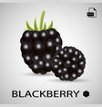 set of two blackberries isolated on a background vector image