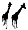 silhouette of giraffe vector image