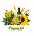 vegetable and sunflower rapeseed and olive oils vector image vector image