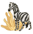 zebra eating dry leaves in africa or savannah