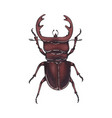 Beetle deer hand drawn insect