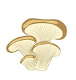 cartoon oyster mushroom isolated on white vector image