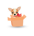 cute chihuahua dog with a red bow in a box vector image vector image