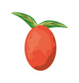 isolated leaves tomato fruit vector image vector image