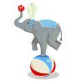 circus elephant stands on a ball vector image