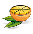 orange fresh and healthy fruit vector image vector image