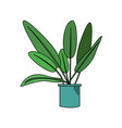 beautiful green plants with big leaf in the pot vector image