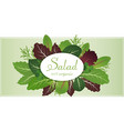 mix salad leaves arugula spinach and lettuce vector image vector image