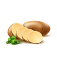 realistic potato with leaves vector image