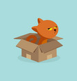cartoon cat in the box vector image vector image