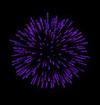 firework isolated beautiful salute on black vector image