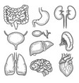 human organs sketch brain kidney heart stomach vector image