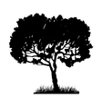 Tree and grass silhouette vector image vector image