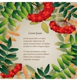 Background with rowan berries leaves and place for vector image vector image