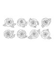 rose flowers design isolated on white background vector image