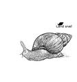 Crawling land snails vector image