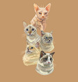 poster with cats vector image vector image