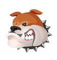 angry bulldog face in metal collar profile view vector image vector image