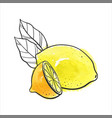 drawing lemon vector image vector image