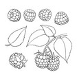 raspberry drawing isolated berry branch vector image vector image