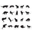 set of cats silhouettes-3 vector image vector image