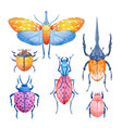 watercolor beetle set vector image vector image