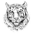 Artwork tiger sketch black and white drawing