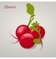 Bright juicy radish simple cartoon style vector image