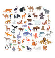 animal full length portraits collection on white vector image vector image