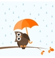 brown owl on the autumn tree vector image