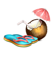 Coconut and Shales vector image