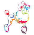 colorful decorative standing portrait of poodle vector image vector image