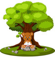 bear reading book and sitting on the stone vector image