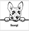 basenji - peeking dogs - - breed face head vector image