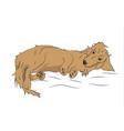 dog lies dachshund brown vector image