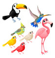 group funny tropical birds vector image