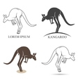kangaroo silhouettes on the white background vector image vector image