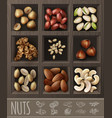 realistic organic nuts advertising template vector image