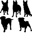 set of silhouettes of pug French bulldog Shepherd vector image vector image