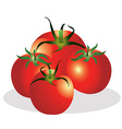 Tomatoes group vector image vector image