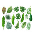 tropical palm leaves set botanical green vector image
