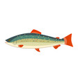 a rainbow trout vector image