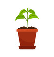 houseplant in flower pot vector image vector image