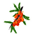 Sea buck thorn made of colorful splashes vector image vector image