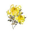 yellow chrysanthemum flowers floral design vector image vector image