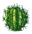 color ferocactus echidne barrel cactus vintage vector image vector image