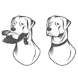 Hunting retriever head vector image vector image
