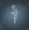 macaw parrot icon sketch on chalkboard vector image